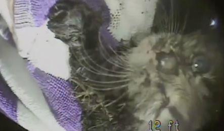 Sauvetage d'un chaton coincé dans un tuyau depuis plusieurs jours